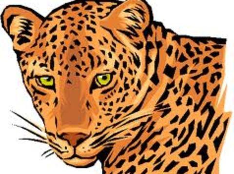 1534339784ll_leopard_image