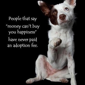 1399310998dog_with_begging_paw