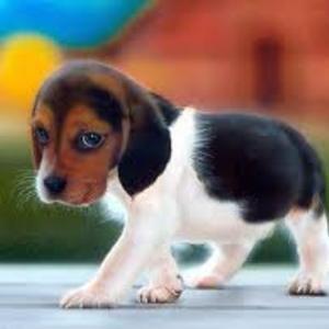 1412534500cute_dog