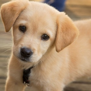 1535743398kriz_puppy